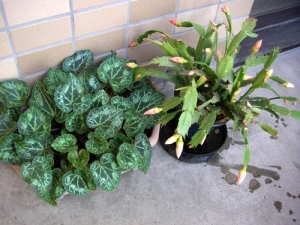 071208_plants