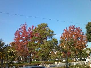 空は青いし樹は赤い