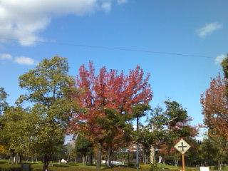 空は青いし紅葉だし