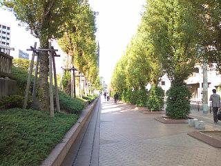 朝の並木道