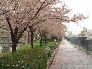 花散らす雨